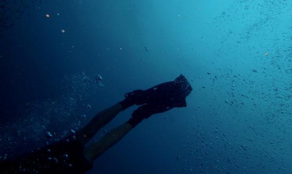 A scuba diver swims through blue water at Aqaba Marine Park, Jordan.