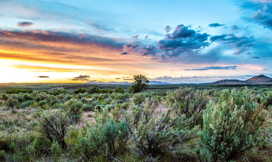 Sunset view over a desert of scrubby bushes