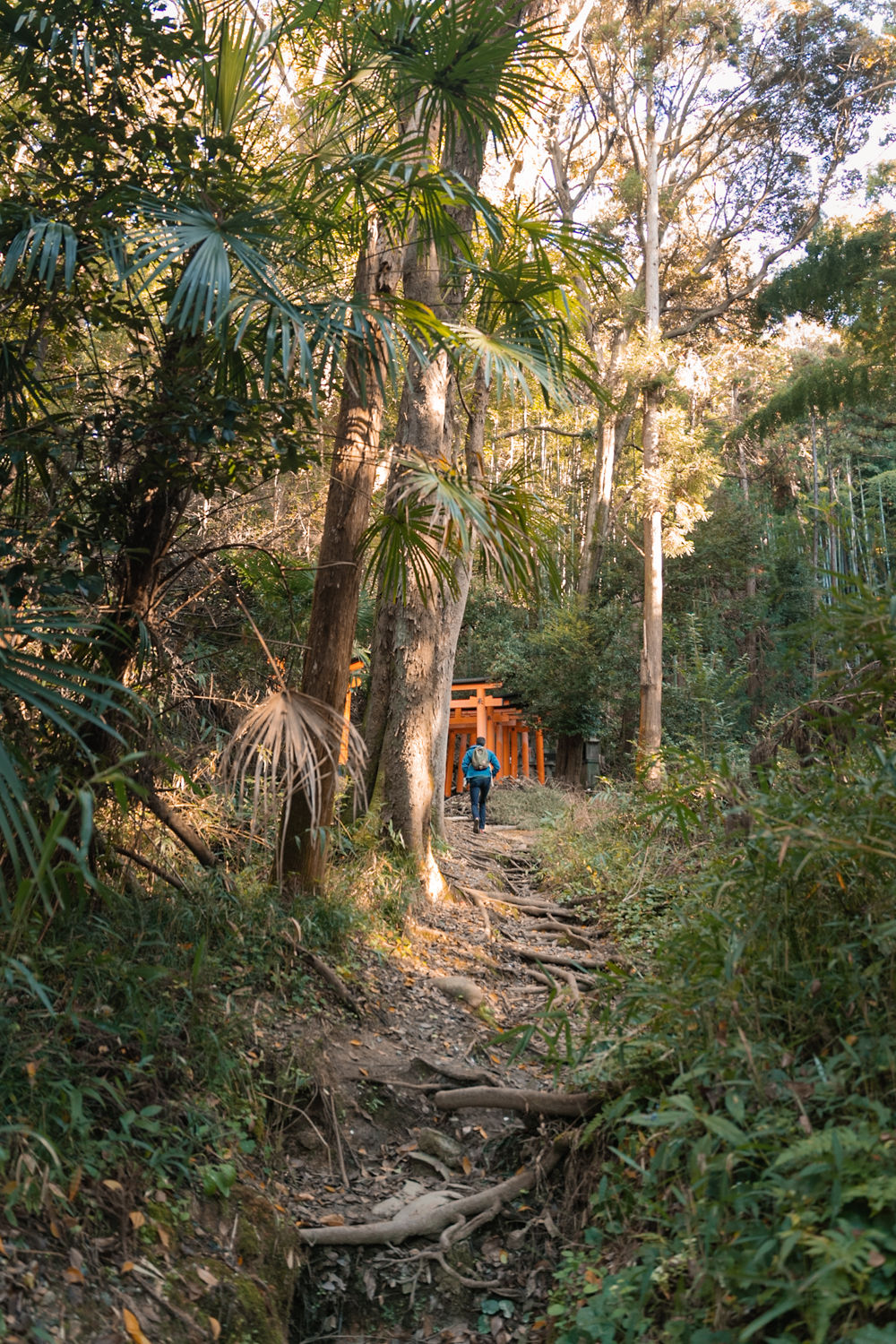 creative traveler on wooded trail