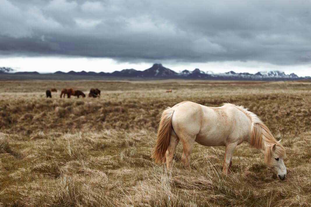 horses graze in mountain foothills