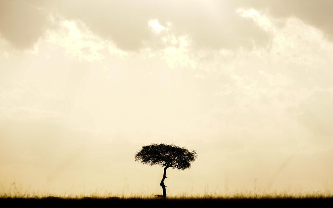 a lone tree in the savannah at dusk
