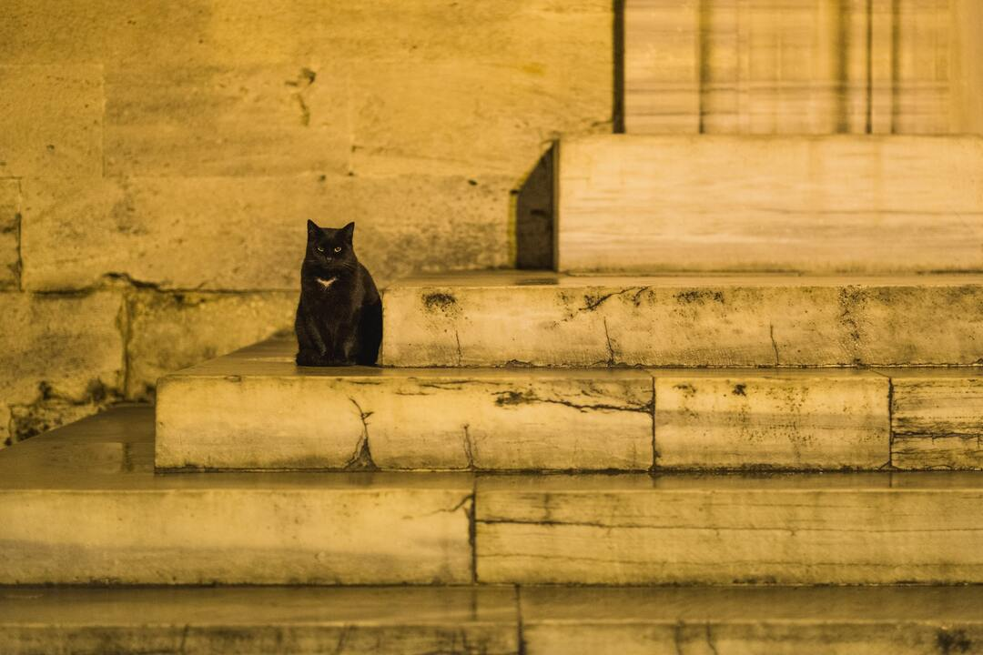 cat sitting on yellow stairs